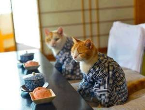 Japanese cats - from Elly