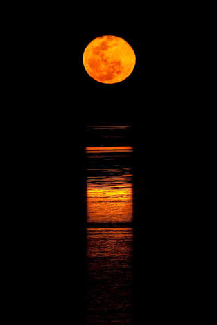 Elly_McDonald_Writer_blood-moon