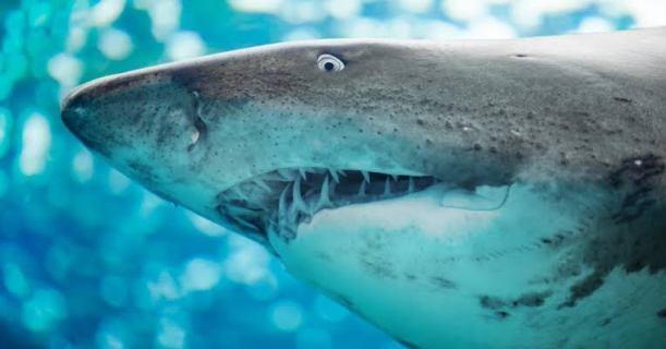 shark_elly_mcdonald_writer